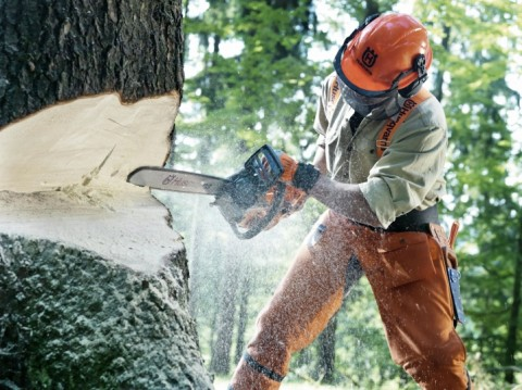 How To Make Tree Felling Notches & Hinges with a Chainsaw